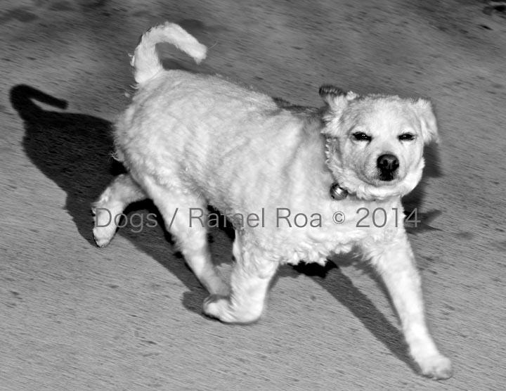 Rafael Roa © 2014 Dog